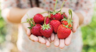 pick your own fruits at trevathan
